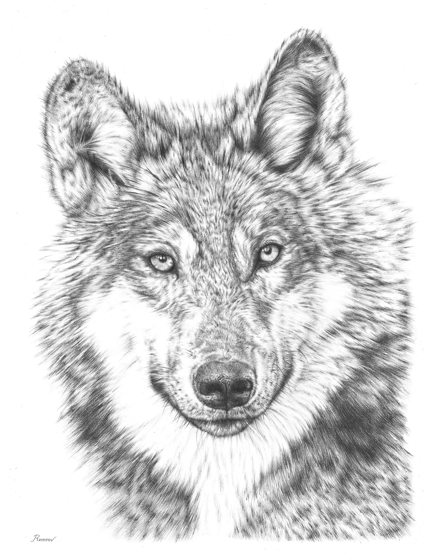 draw wolf wolf pencil drawing artwork print a3 a4 sizes signed by wolf draw