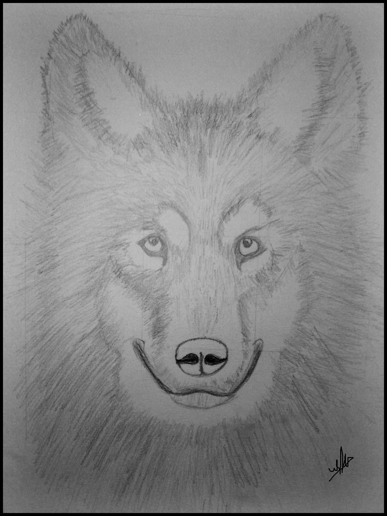 draw wolf wolf sketch images at paintingvalleycom explore wolf draw