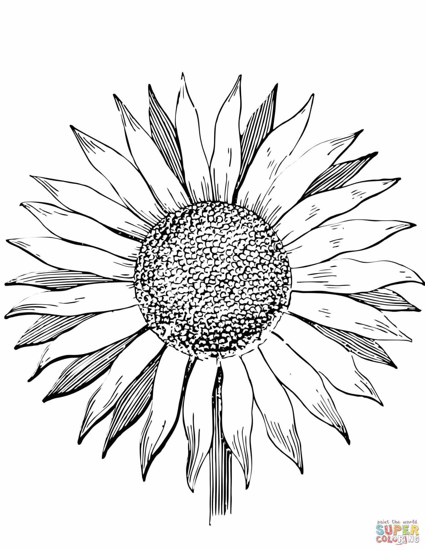 drawing of a sunflower black and white sunflower drawing free download on drawing a sunflower of