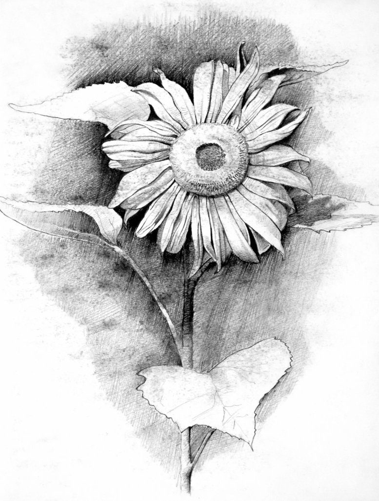 drawing of a sunflower free 10 sunflower drawings in ai drawing sunflower of a