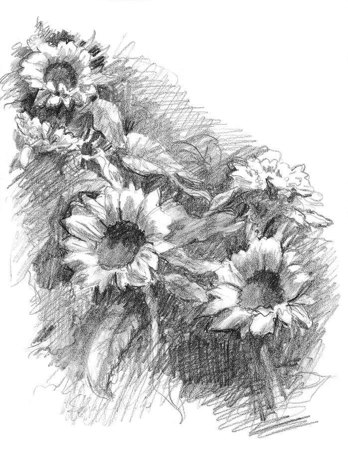 drawing of a sunflower pencil sketch sunflower sketches drawings pencil sketch drawing a sunflower of