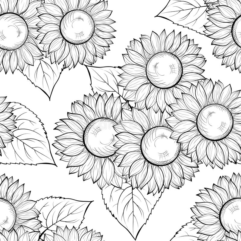 drawing of a sunflower sketch floral decorative set sunflower drawings sunflower a of drawing