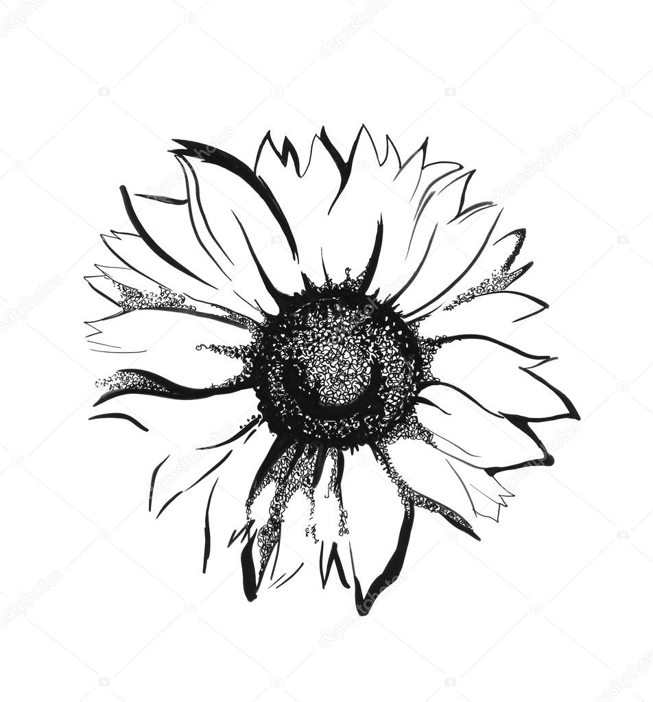 drawing of a sunflower sunflower black and white drawing at getdrawings free drawing of a sunflower