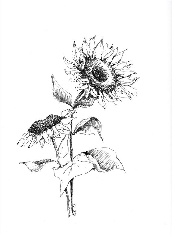 drawing of a sunflower sunflower drawing images free at getdrawings free download drawing of sunflower a