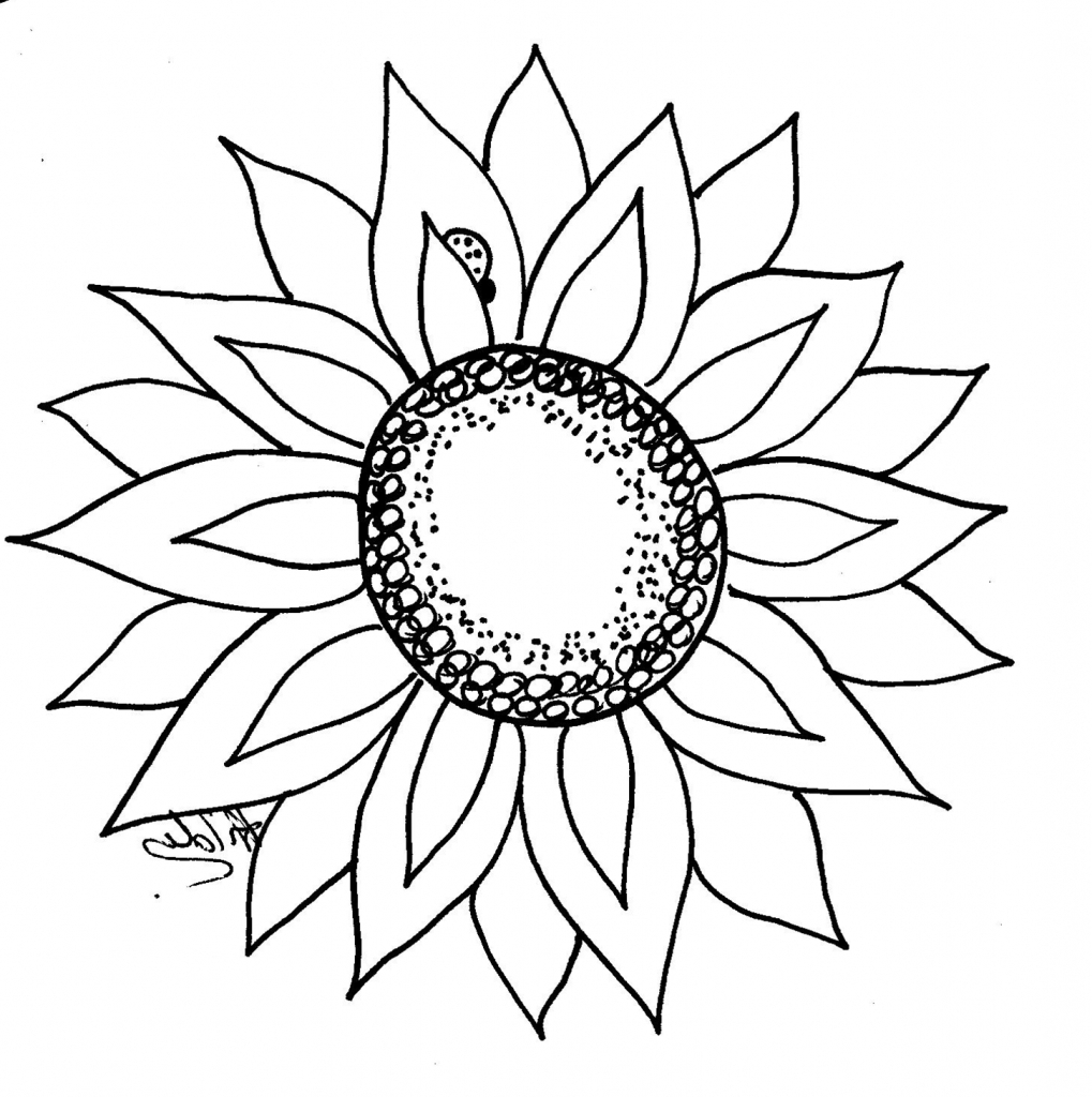 drawing of a sunflower sunflower drawing simple free download on clipartmag drawing a of sunflower
