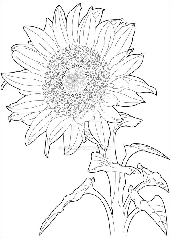 drawing of a sunflower sunflower pencil drawing at getdrawings free download sunflower of drawing a