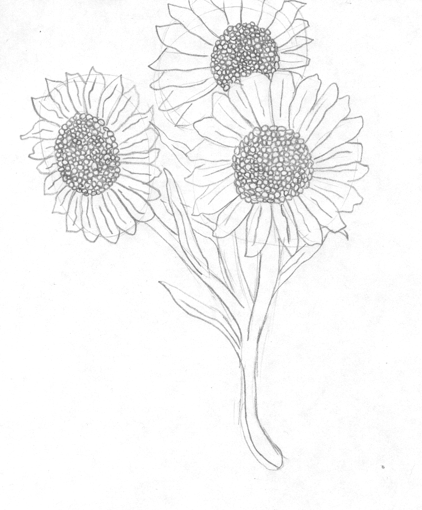 drawing of a sunflower sunflower sketch original drawing sunflower drawing black of drawing sunflower a