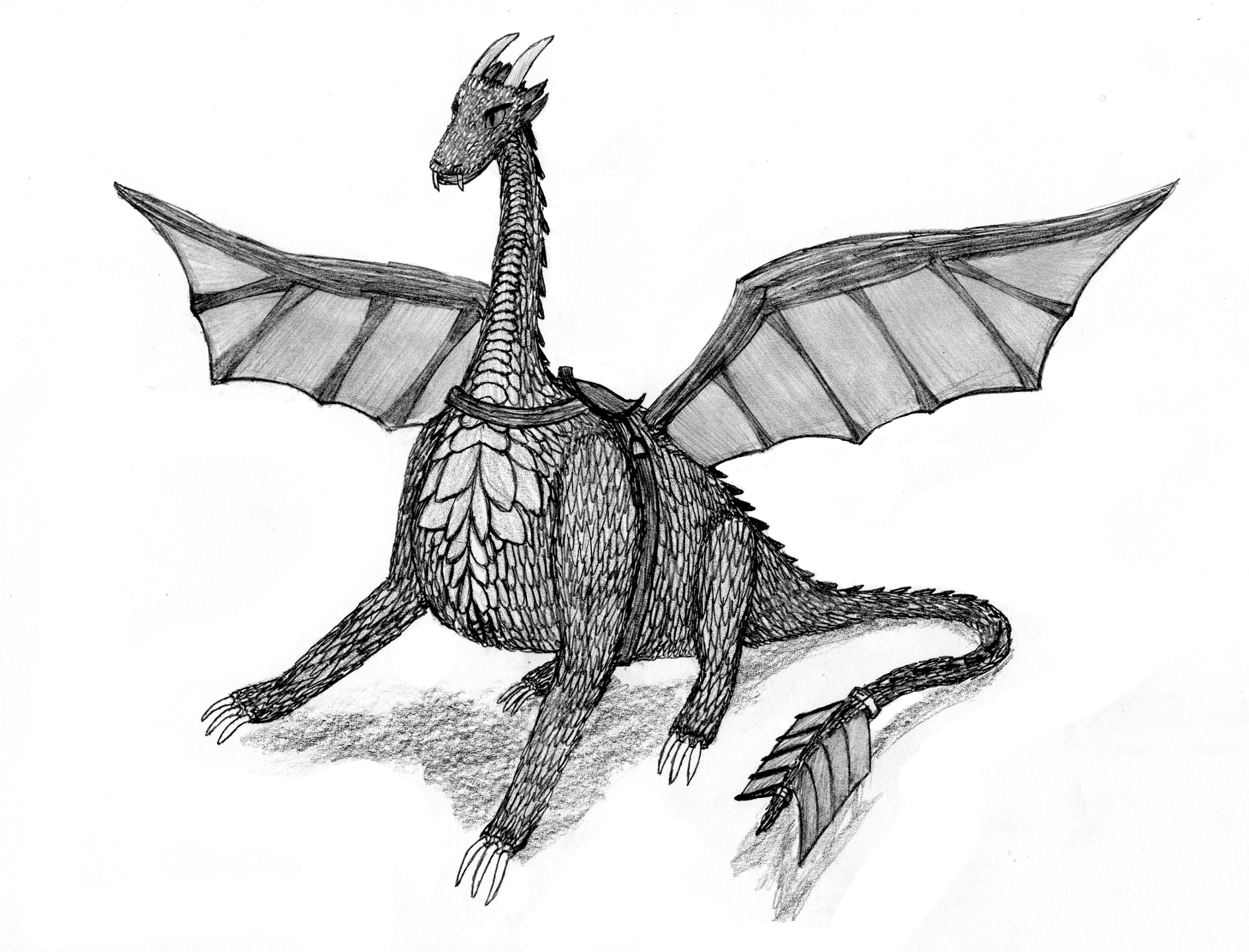 Drawings of toothless