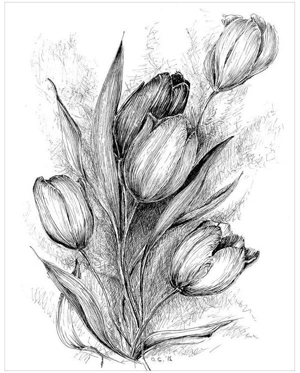 drawings of tulips a drawing of double bloom tulips coloring page kids play drawings of tulips