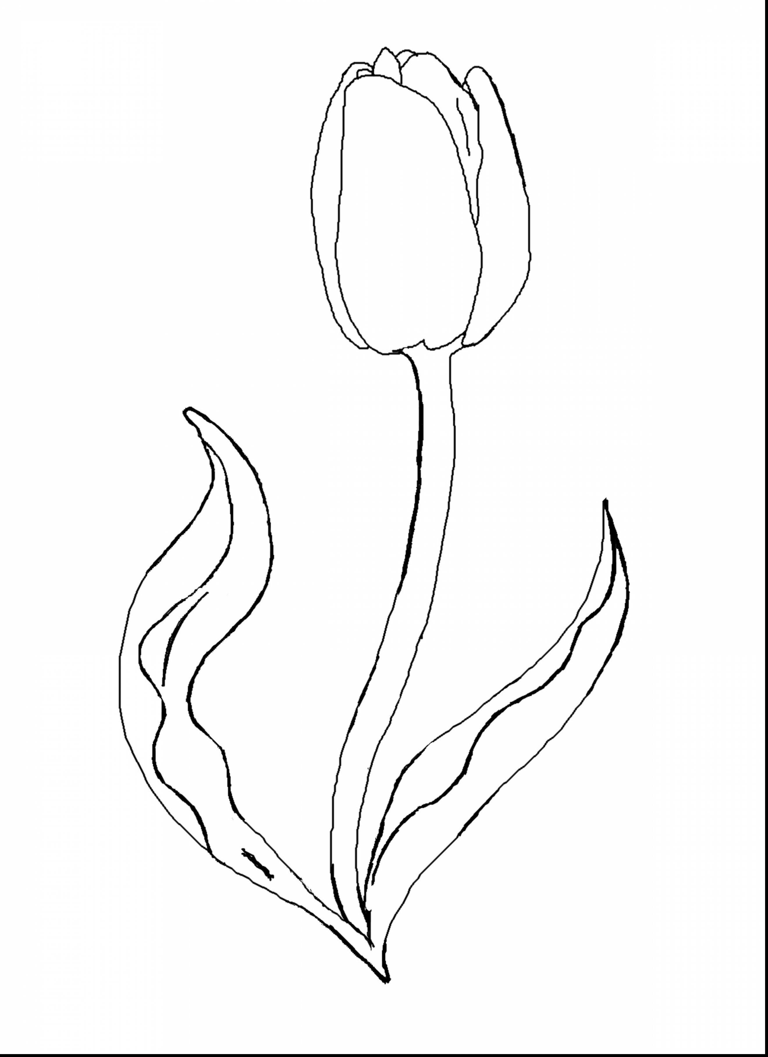 drawings of tulips how to draw a tulip step by step drawing tutorials tulips of drawings