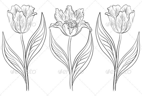 drawings of tulips one tulip two tulip three to see more of our work go tulips drawings of