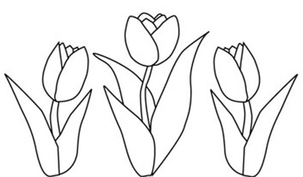 drawings of tulips tulip drawing free download on clipartmag tulips of drawings