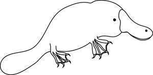 duck billed platypus coloring page 23 best images about animals on pinterest coloring duck billed coloring page platypus