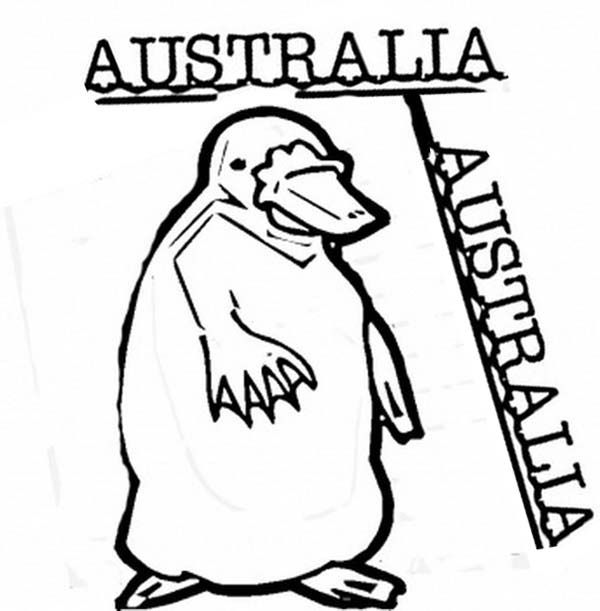 duck billed platypus coloring page clipart panda free clipart images coloring page billed duck platypus