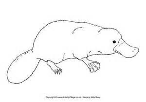 duck billed platypus coloring page duck billed platypus coloring page animal coloring pages page coloring duck platypus billed