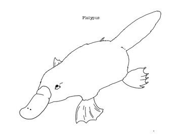 duck billed platypus coloring page duckbill platypus coloring page divyajananiorg duck billed page coloring platypus