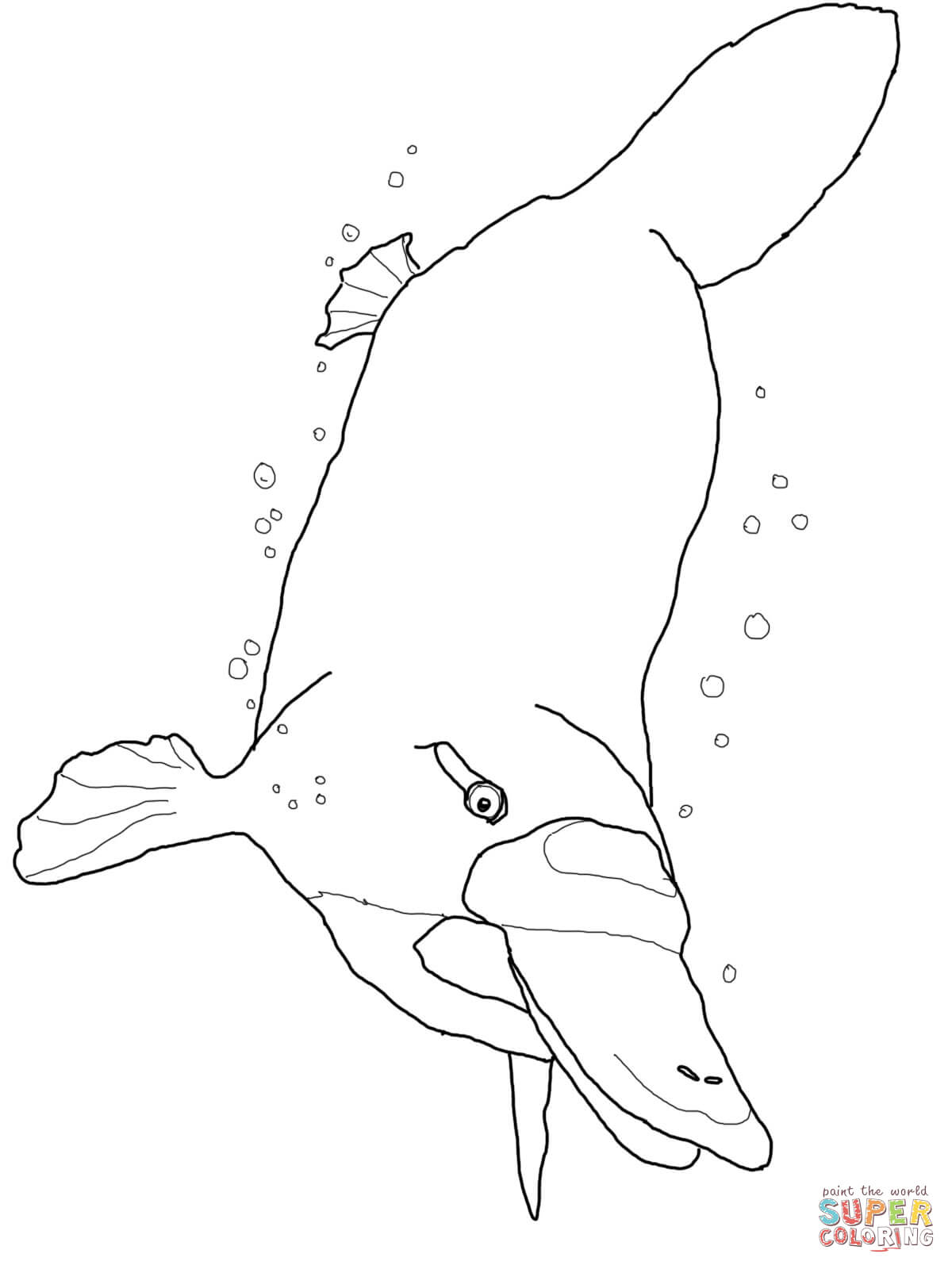 duck billed platypus coloring page platypus on a bank coloring page free printable coloring platypus coloring duck page billed