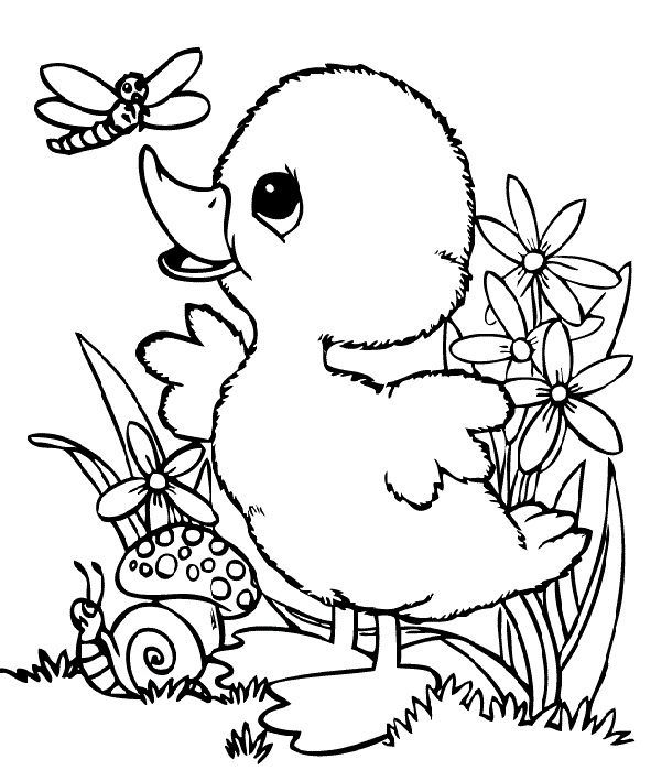 duck coloring book baby duck coloring pages at getcoloringscom free coloring book duck