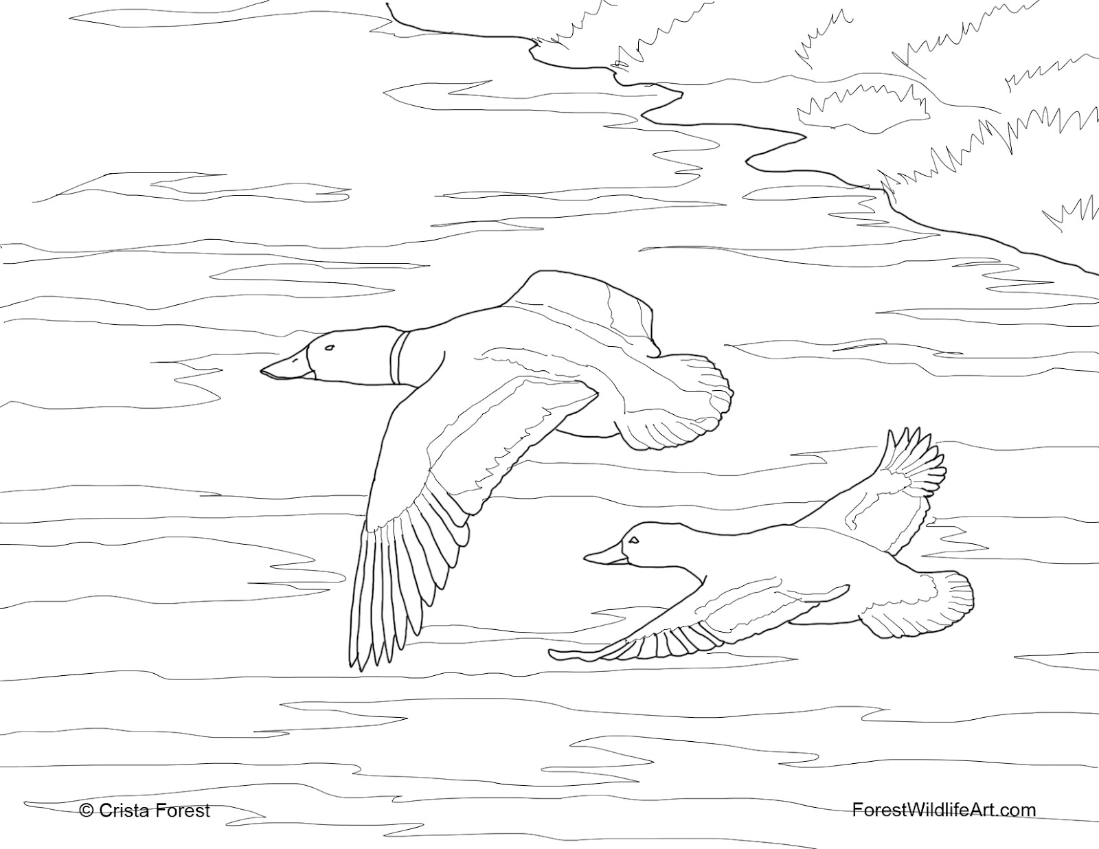 duck coloring book crista forest39s animals art coloring book page coloring book duck