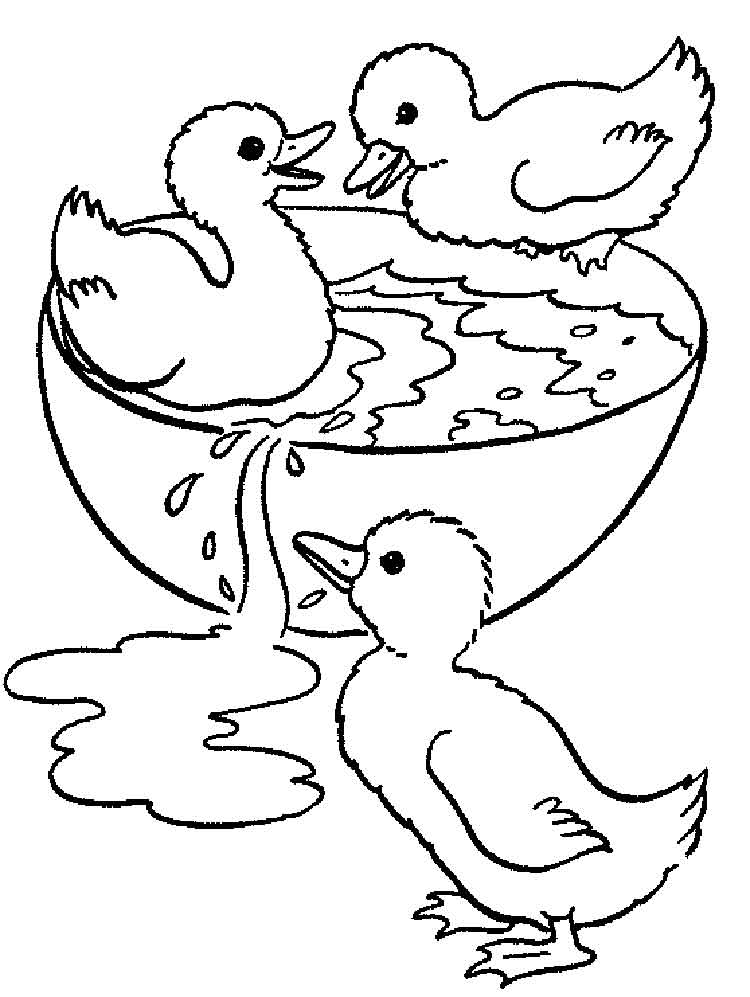 duck coloring book duck coloring pages download and print duck coloring pages coloring duck book