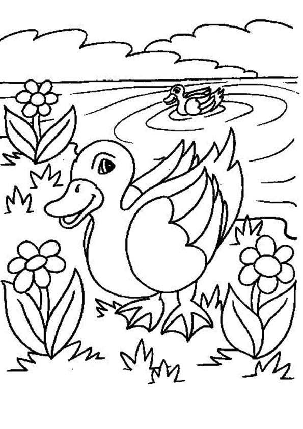 duck coloring book free printable duck coloring pages duck coloring pictures duck book coloring