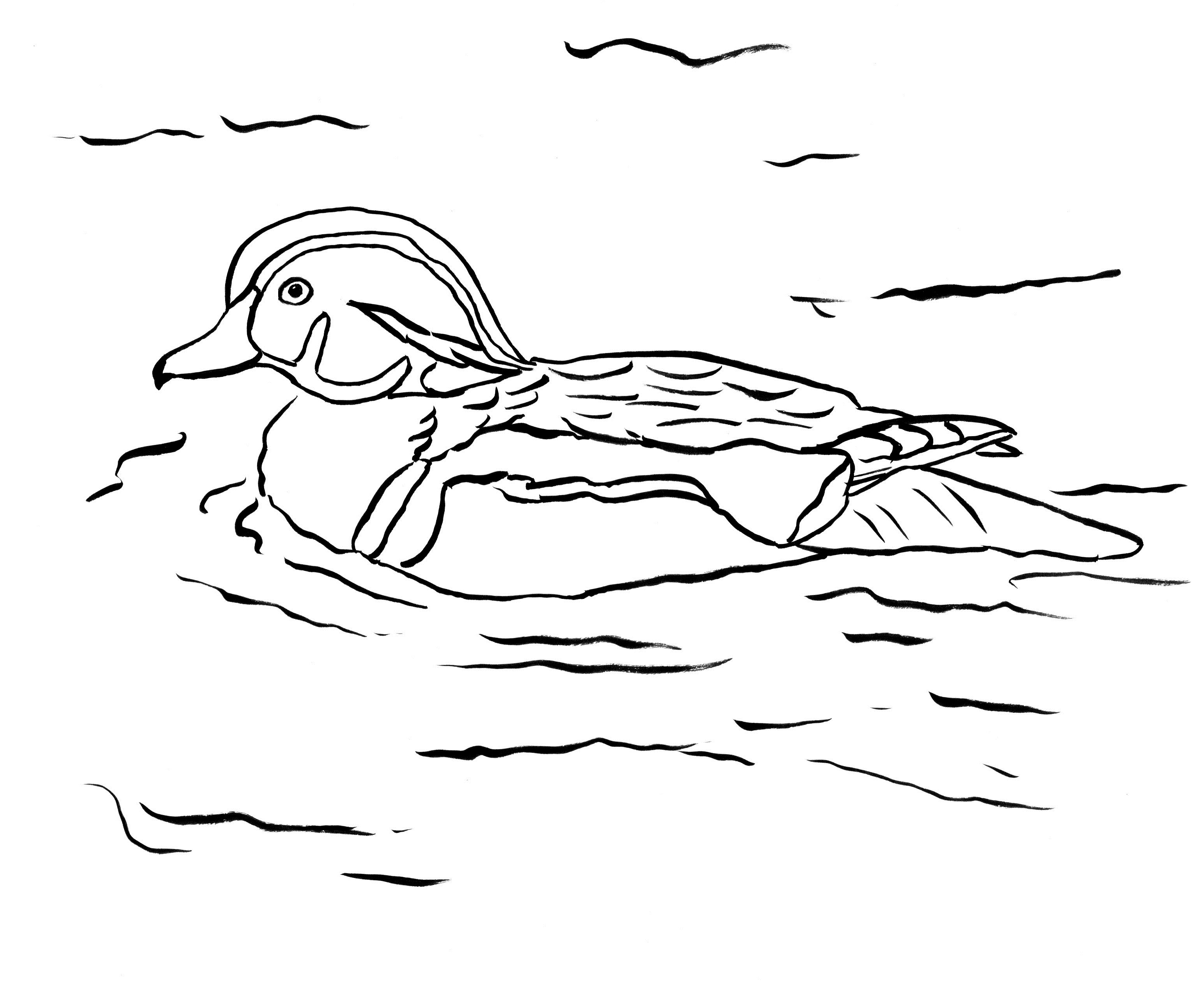 duck coloring book wood duck coloring page art starts for kids duck coloring book