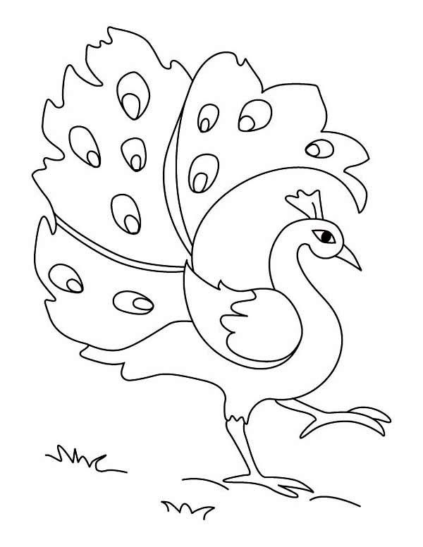 easy cute peacock coloring pages a cartoon imagery of peacock coloring page kids play easy peacock cute coloring pages