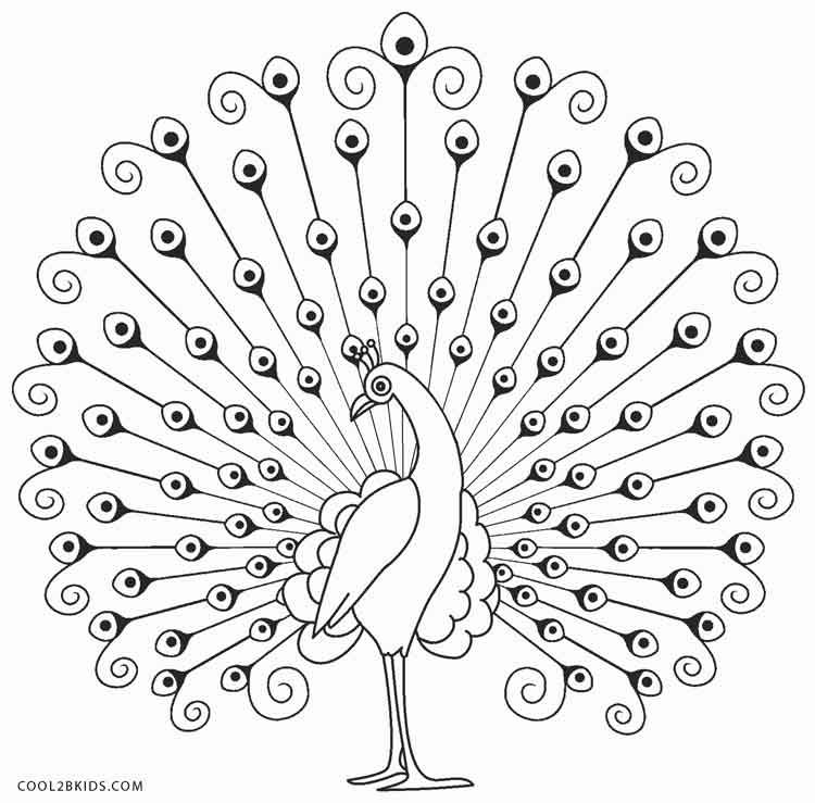 easy cute peacock coloring pages colours drawing wallpaper simple drawing of green peacock cute easy peacock pages coloring