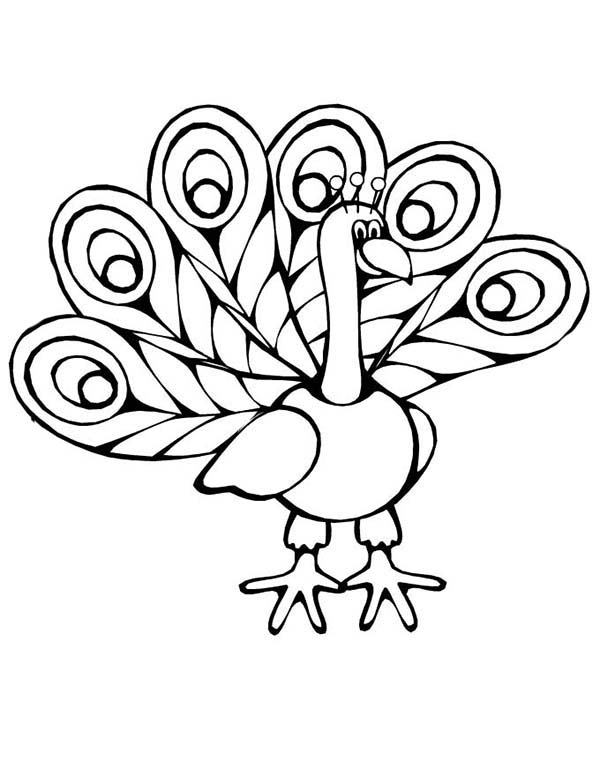 easy cute peacock coloring pages peacock coloring pages to print at getdrawings free download pages peacock easy cute coloring