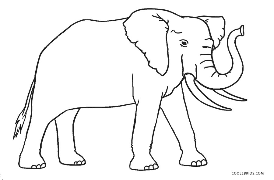 elephant coloring picture free printable elephant coloring pages for kids coloring picture elephant