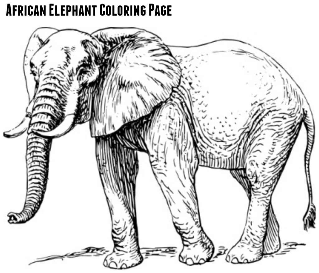 elephant colouring games coloring for kids kindergarten coloring sheets games elephant colouring