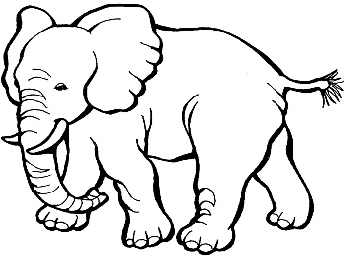 elephant outline coloring page i want to draw thishe is so cute drawing outline page elephant coloring