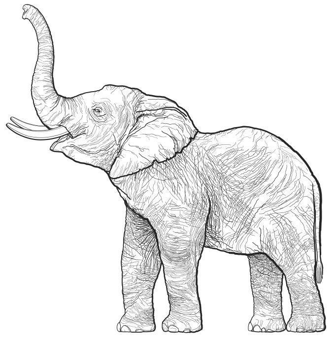 elephant outline coloring page outline of a elephant coloring home coloring page outline elephant