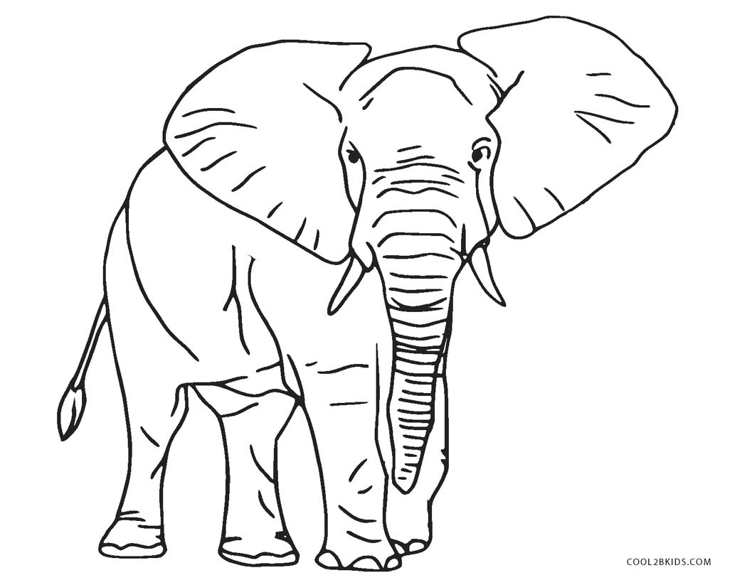 elephant picture for coloring 13 baby elephant coloring page to print print color craft coloring for picture elephant