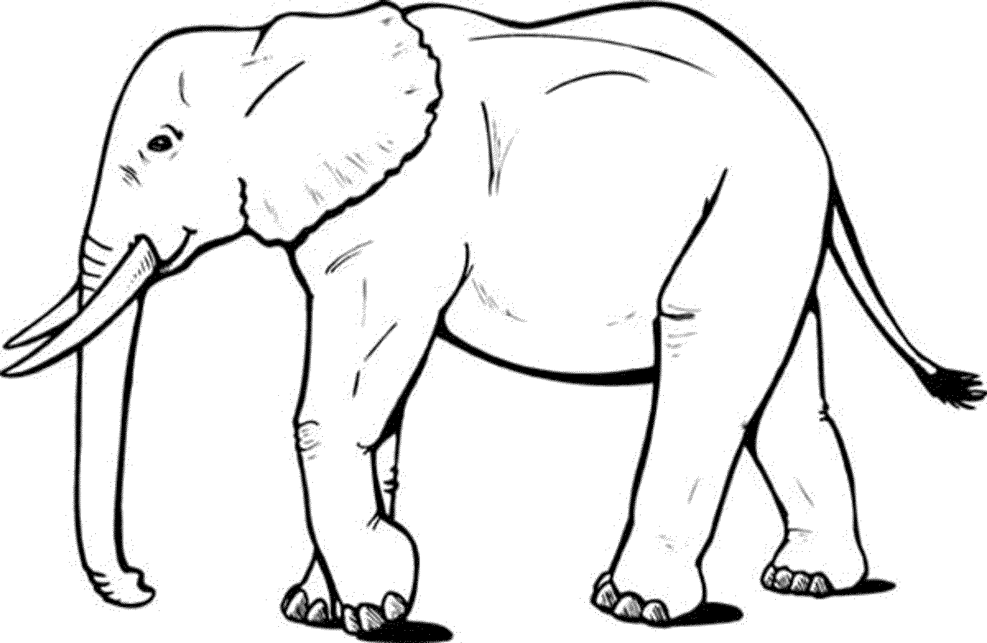 elephant picture for coloring angry african elephant coloring pages coloring sky coloring elephant for picture