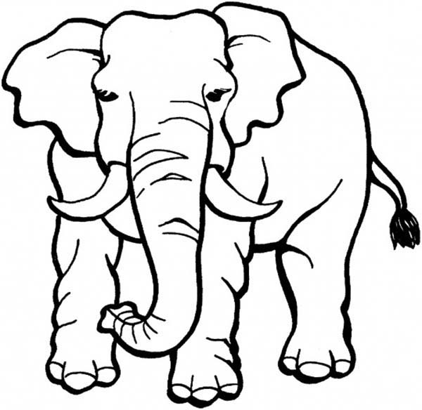 elephant picture for coloring elephant picture for coloring coloring for picture elephant