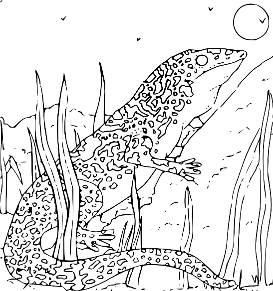 endangered species coloring pages endangered animals coloring pages hd football endangered species pages coloring