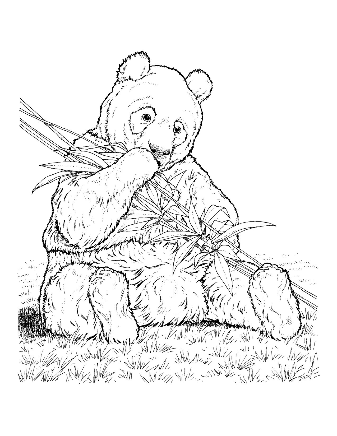 endangered species coloring pages free printable rainforest coloring pages coloring home endangered pages coloring species