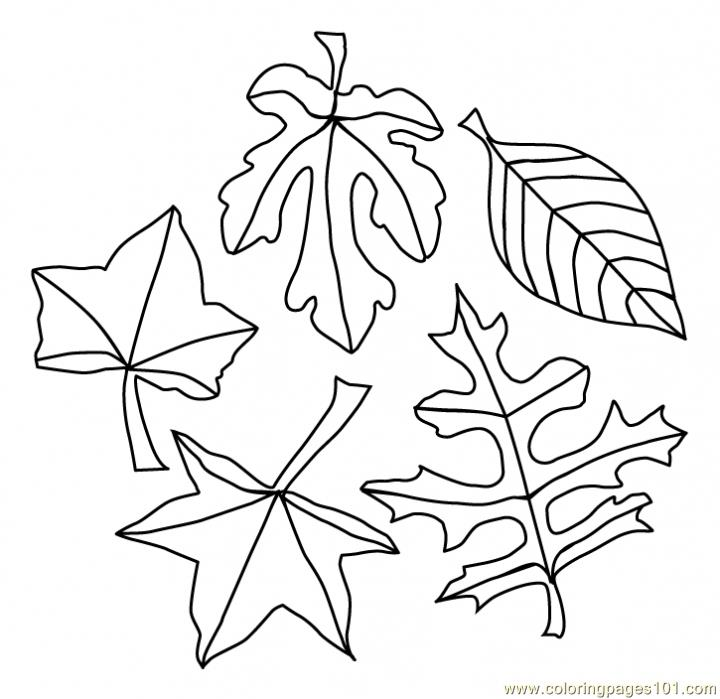 fall leaves coloring sheets free printable leaf coloring pages for kids cool2bkids fall coloring sheets leaves
