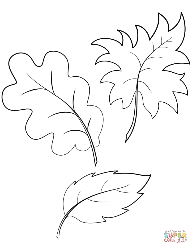 fall leaves coloring sheets free printable leaf coloring pages for kids leaves coloring fall sheets