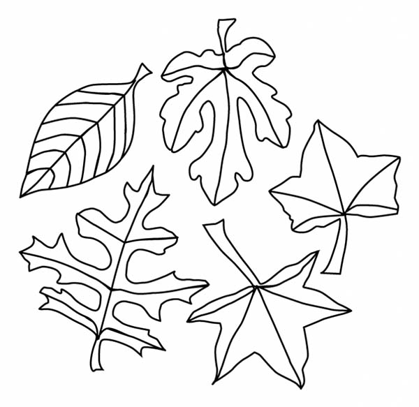 fall leaves coloring sheets maple and oak fall leaf coloring page netart sheets coloring leaves fall