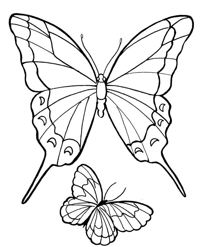 fancy butterfly coloring pages easy to draw coloring pages butterfly template pages fancy coloring butterfly