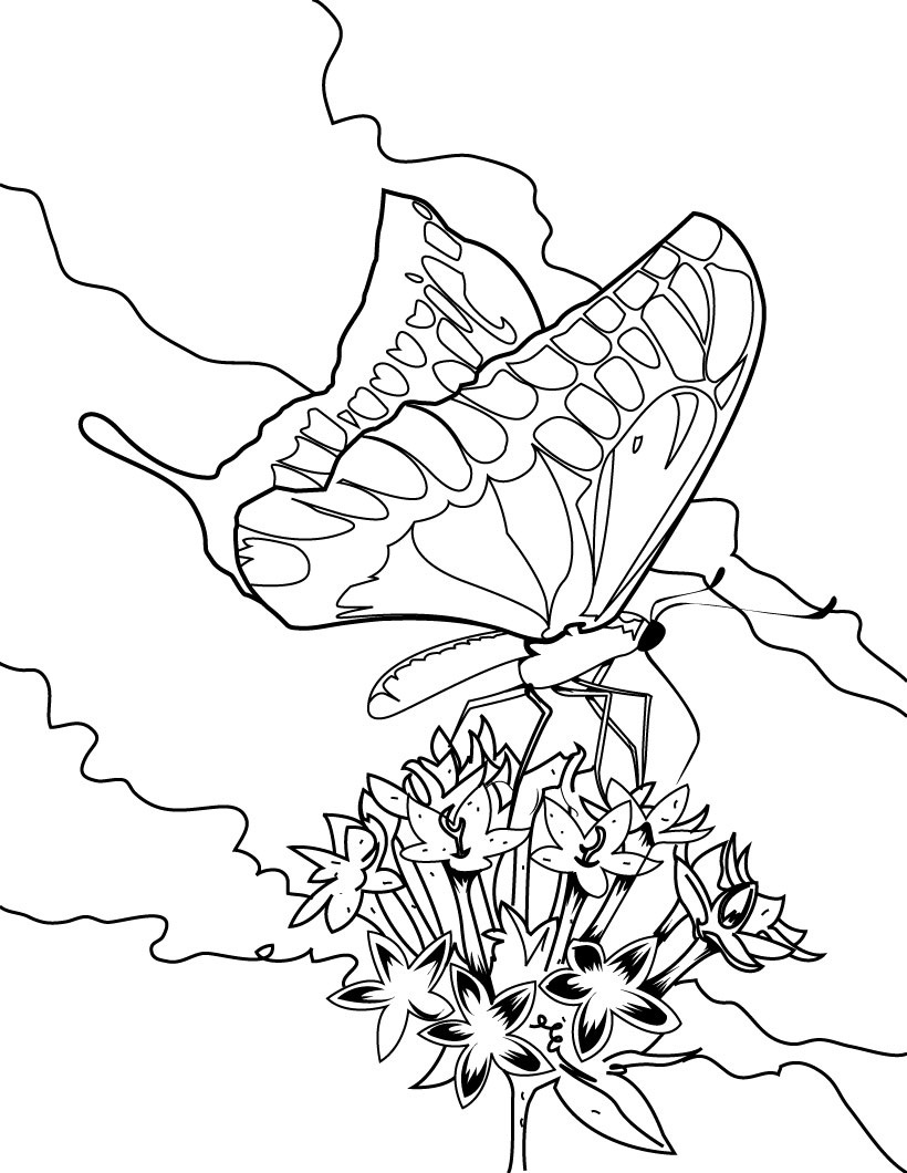 fancy butterfly coloring pages fancy butterfly coloring page free butterfly coloring fancy butterfly coloring pages