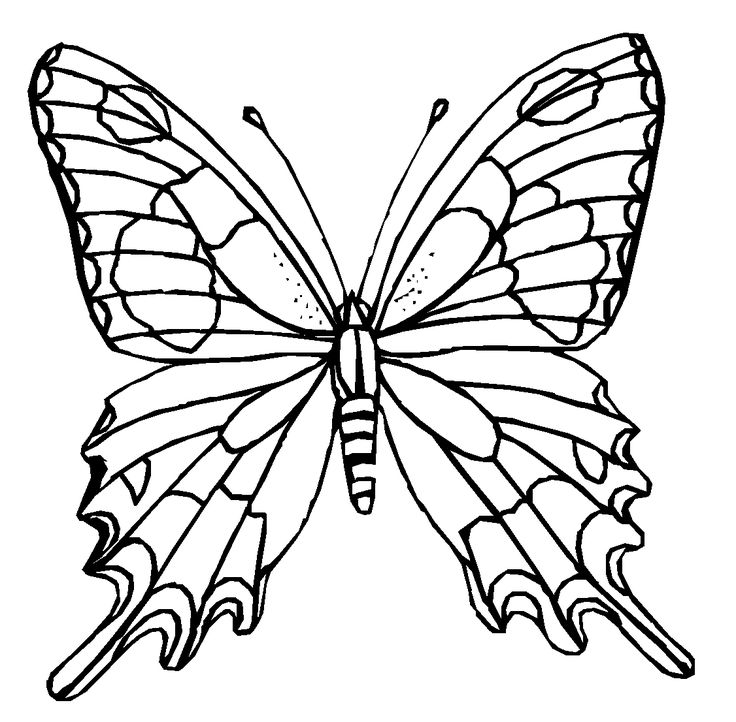 fancy butterfly coloring pages fancy butterfly pages coloring pages butterfly pages fancy coloring