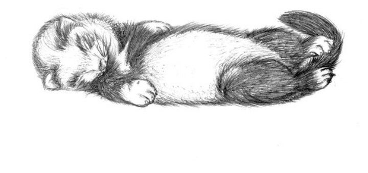 ferret drawings black and white ferret clipart 10 free cliparts download drawings ferret