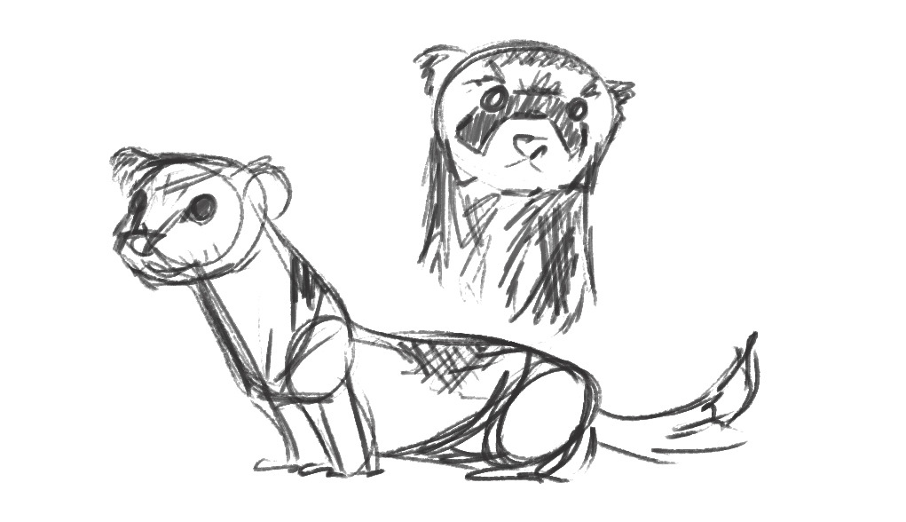 ferret drawings black footed ferret drawing at getdrawings free download ferret drawings