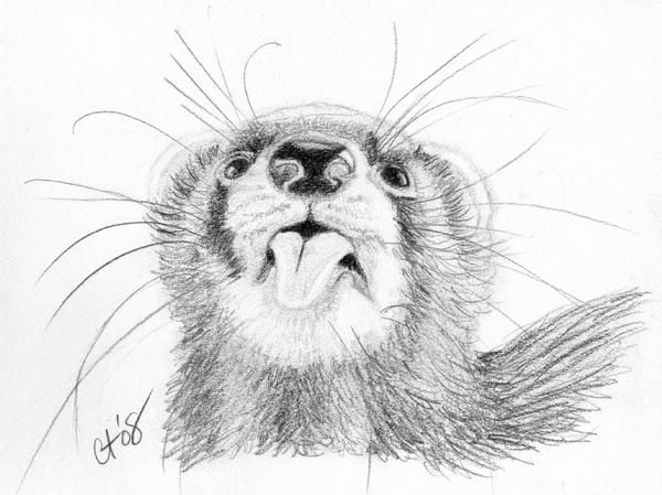ferret drawings how to draw a ferret animal drawings cute ferrets ferret drawings