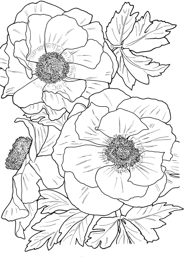 floral coloring pages columbine flowers coloring pages download and print pages coloring floral