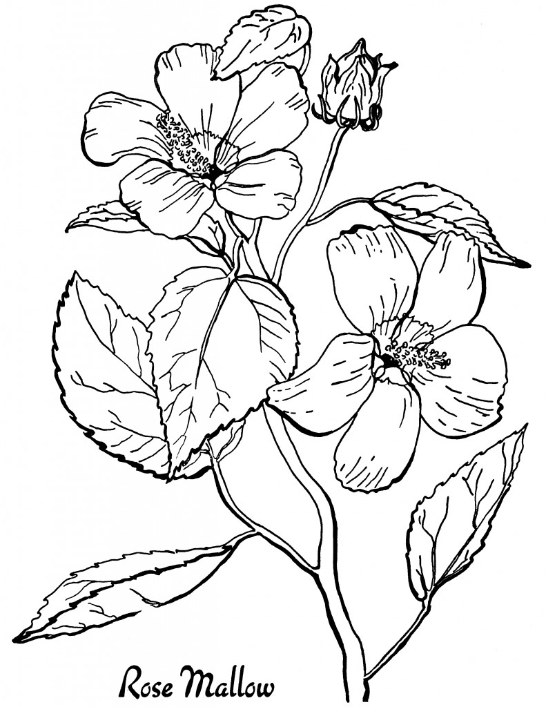 floral coloring pages flower coloring pages for adults pages coloring floral