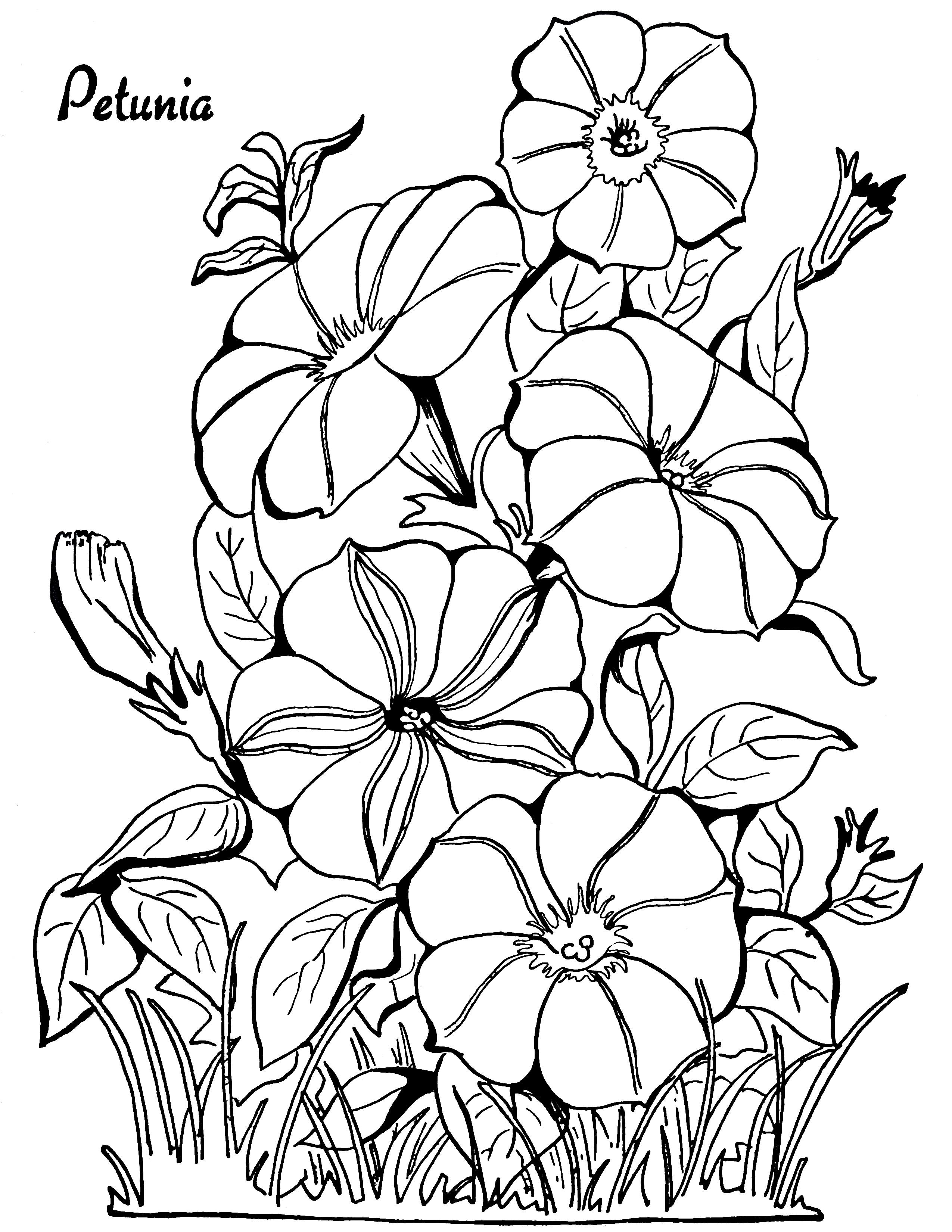 flower coloring pages adults flower mandala coloring page adult coloring art therapy pdf pages adults flower coloring
